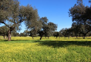 Dehesa Extremadura © Jonathan Haller