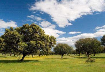 Dehesa Extremadura © agforward.eu