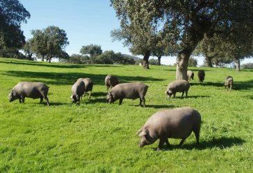 Dehesa Extremadura © extremadura2030.com