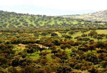 Dehesa Extremadura © soloiberico.filrd.wordpress.com