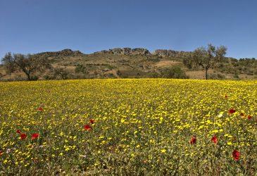 Zafra, el Castellar © segedano.wordpress.com